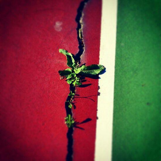 Tenniscourt Survivor Plant Contrast Naturepower Beauty