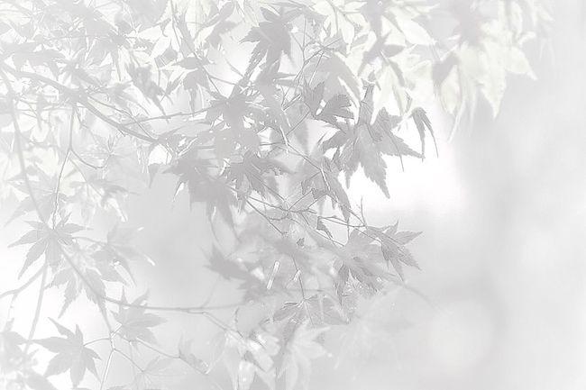 EyeEm Nature Lover Monochrome EyeEm Best Shots - Black + White Hanging Out Hagging A Tree Leaf Highkey EyeEm Gallery Eye4photography  ふんわりPhoto Foggy Foggy Day