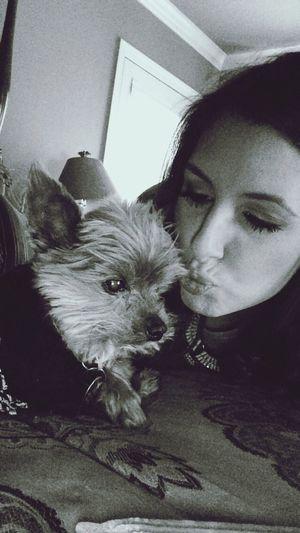 RIP my baby, Harley 😢 Yorkie YorkieBestShots Pets Yorkshire Terrier My Baby I Love My Dog