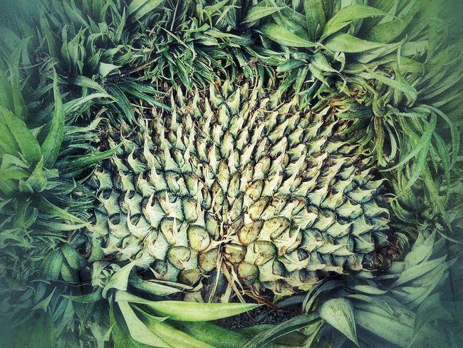 Close Up Close Up Photography Close Up Collection Close Up Fruit Pineapple Pineapple Fruit Fruit Photography Fruit Collection Flower Nature
