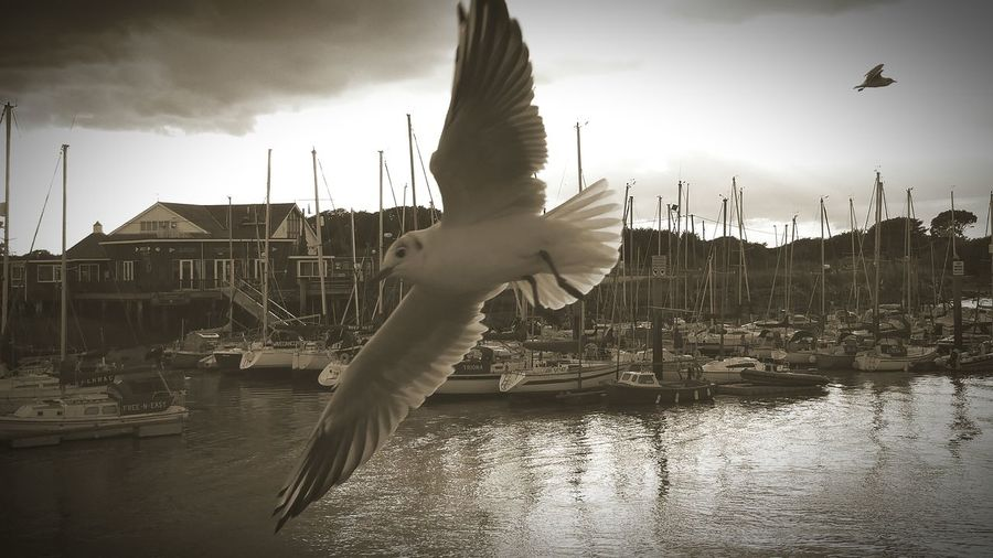 Close-Up Of Seagull Flying Over Harbor Against Sky
