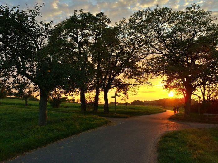 Sunset Trees Landscape
