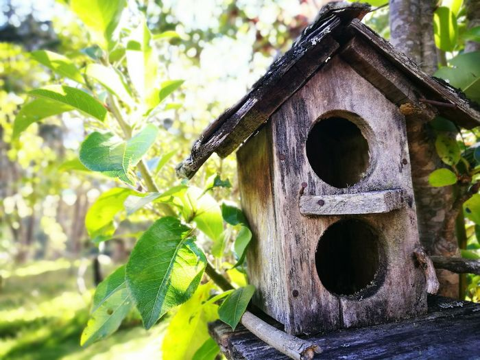 Sin Filtros Relaxing Nofilter Bird House Nature