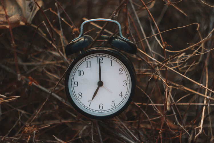 Time Clock Number No People Alarm Clock Close-up Focus On Foreground Nature Outdoors Tree Day Clock Hand Plant Accuracy Shape Old Minute Hand Branch Instrument Of Time