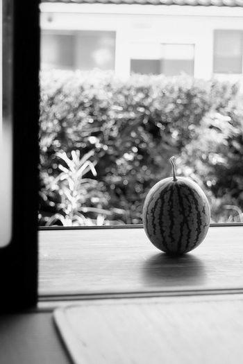 EyeEm Nature Lover EyeEm Gallery EyeEm Best Shots - Nature Japan Japan Photography 日本 和 果物 スイカ 縁側 モノクロ Watermelon Fruit Monochrome Christmas Decoration Table Celebration Home Interior Christmas Window Close-up Plant