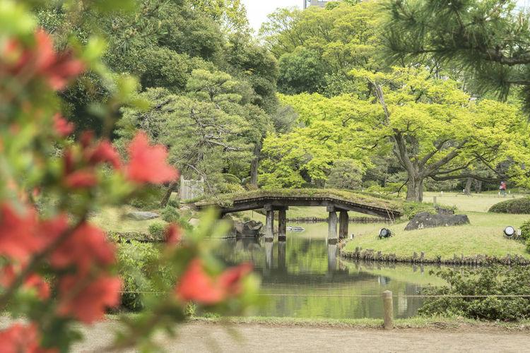 Bridge over lake against trees