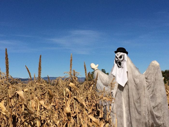 Scarecrow by crops on field
