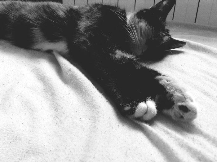 Cat Taking Photos Sleeping