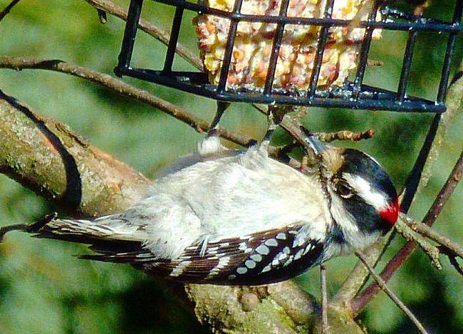 Birds Color Photography Bird Photography Birdwatching Animals Nature Outdoors Bird Watching Wood Pecker