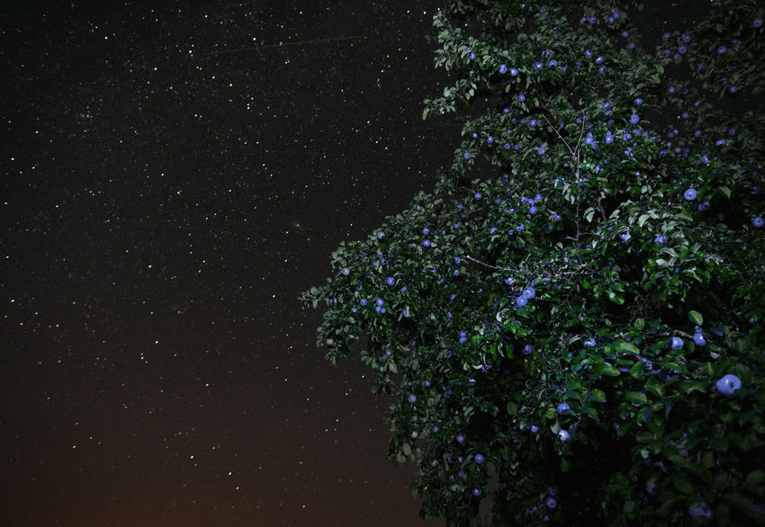 Blueberry Berries Branches Cosmos Linas Was Here Nature Romantic View Apple Tree Apples Blue Apples Green Leaves Nightscape Starry Sky Summer Night