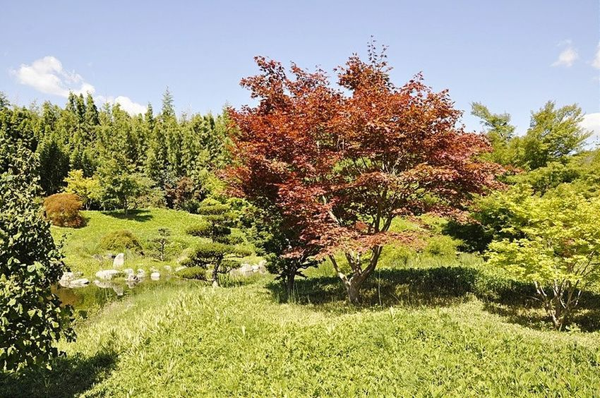 Tree Growth Nature Beauty In Nature Outdoors Plant EyeEmNewHere FranceTree Anduze Landscape Forest Green Color Nature