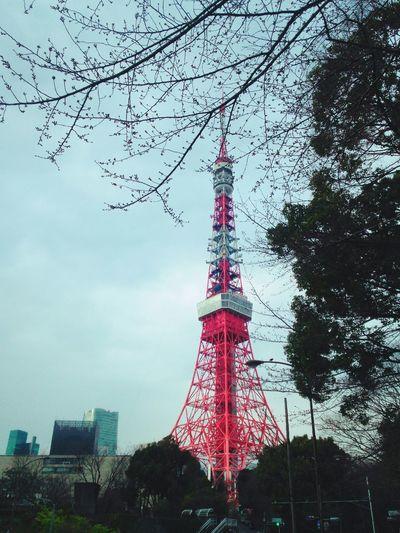 東京タワー 芝公園 Tokyo Tower 桜🌸咲いてればなぁ