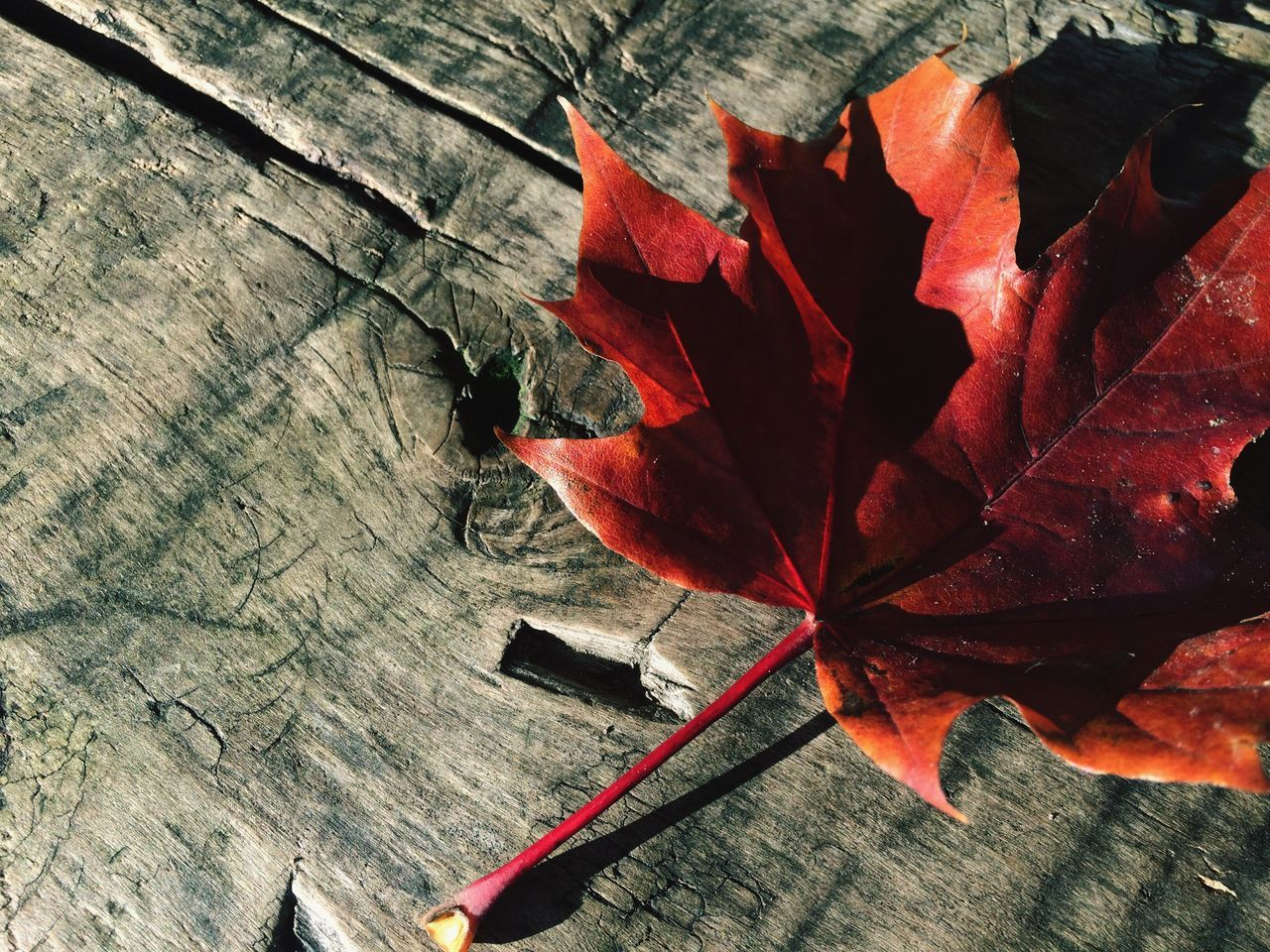 leaf, autumn, change, maple leaf, dry, close-up, day, nature, outdoors, high angle view, no people, red, beauty in nature, maple, fragility