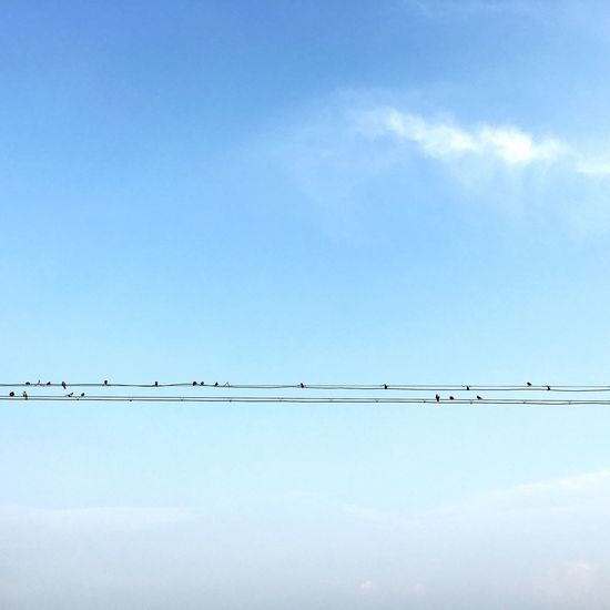 blue sky and so many birds