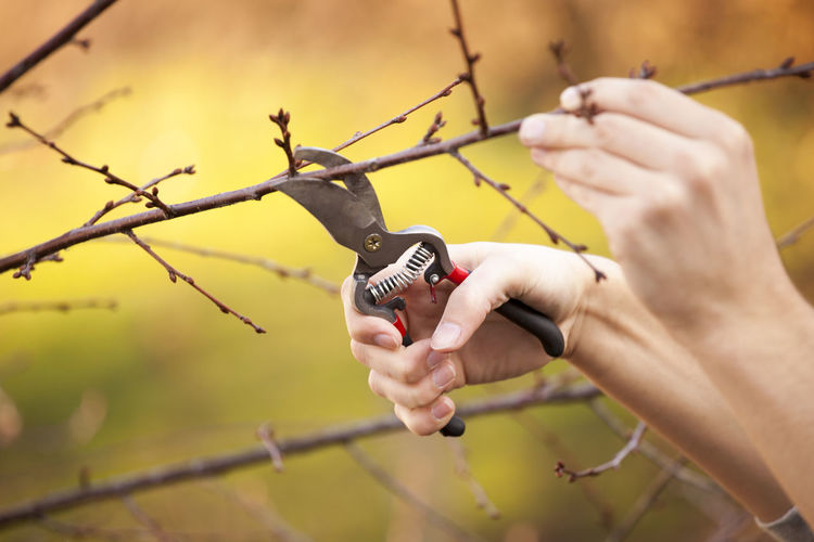 Cropped Hands Cutting Branches With Pliers