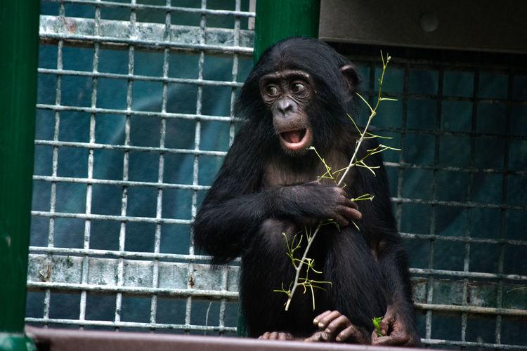 Portrait of black looking away in zoo