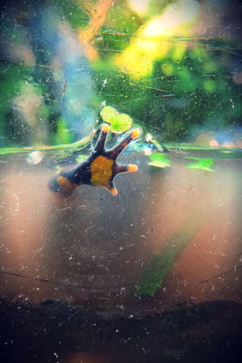 Hello from the other side... :) Animal Hidden Animal Paw Animal Themes Black And Yellow Frog Day Dirty Exotic Frog Floating On Water Frog FUNNY ANIMALS Green Color Hello Leaves Mud Muddy Water Nature No People Scratched Glass Swimming Water Waterfront Zoo Animals  Zoology