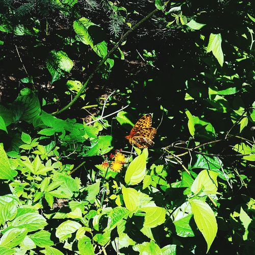 Green Color Outdoors Beauty In Nature Butterfly Animal Themes