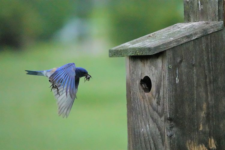 Close-up of bird flying over wooden post