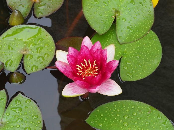 Kamakura Summer Flowers 2018 Japanese Tradition Kamakura Japan Beauty In Nature Bonsai Flower Flowering Plant Growth Nature No People Plant