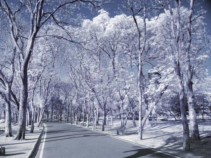 Snow covered road amidst bare trees in winter