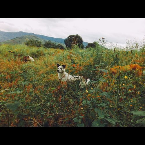 Pets Guatemala Landscape Etta Taking Photos Cheese! Dog Walking Enjoying Life Photography Cute Pets MiVida❤💚 Mybitch 😍😂😁