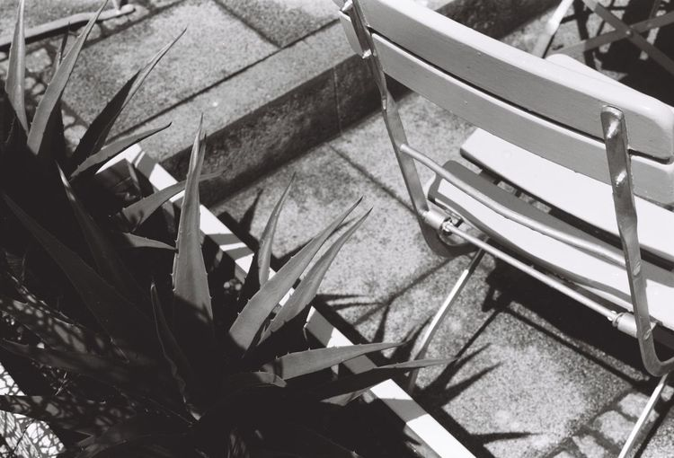 Chair Agave Close-up Contrast Day High Angle View No People Outdoors