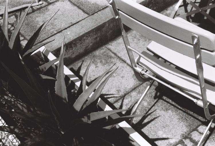 Chair Agave