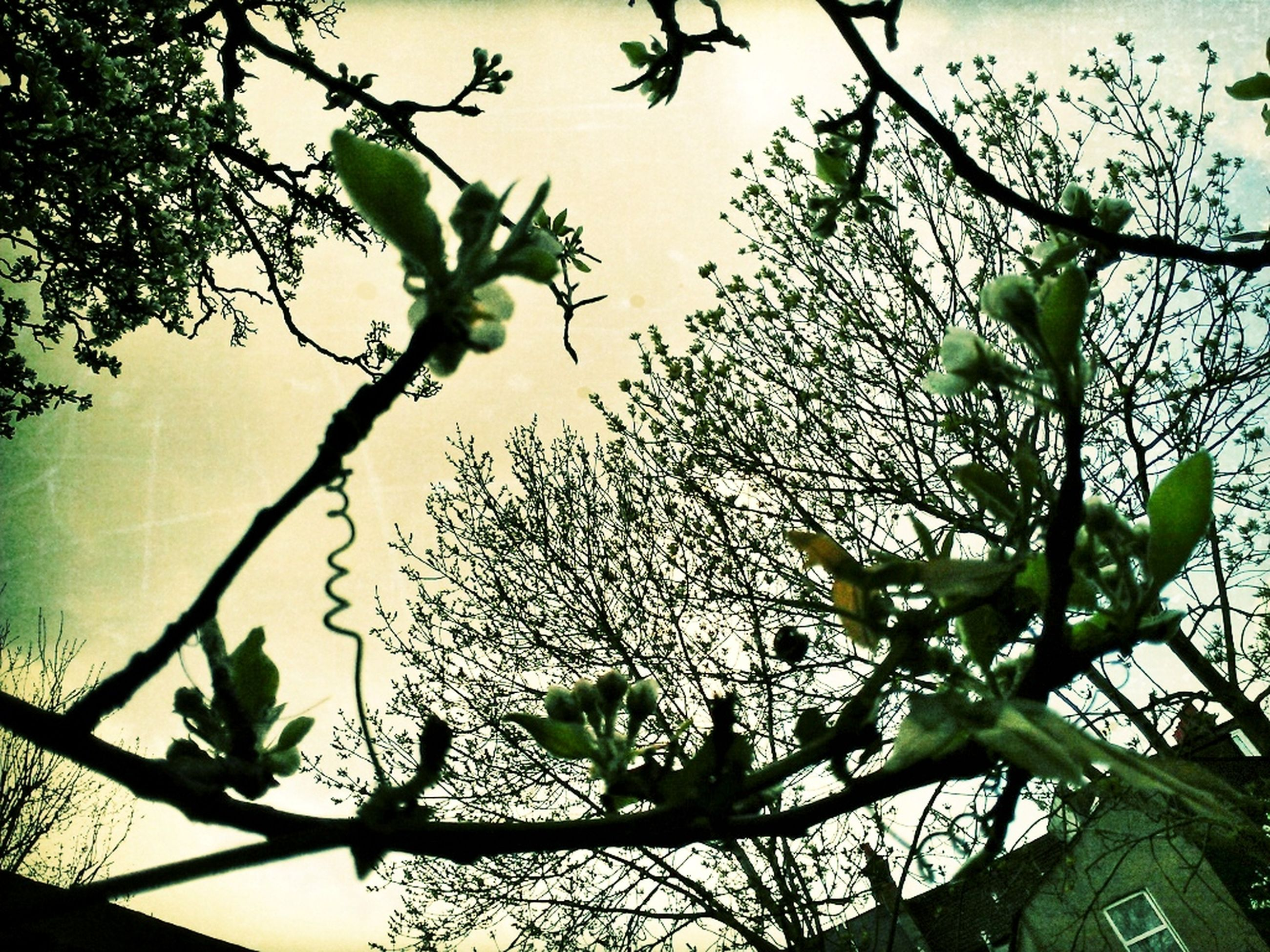 branch, low angle view, tree, bird, growth, leaf, nature, sky, animal themes, animals in the wild, twig, wildlife, flower, perching, plant, beauty in nature, silhouette, outdoors, clear sky, day