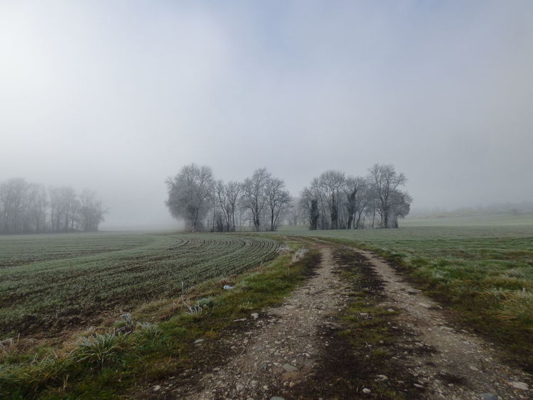 Agriculture Day Fog Frosty Landscape Nature No People Outdoors Rain Rural Scene Sky Tranquil Scene Tranquility Tree Weather Winter