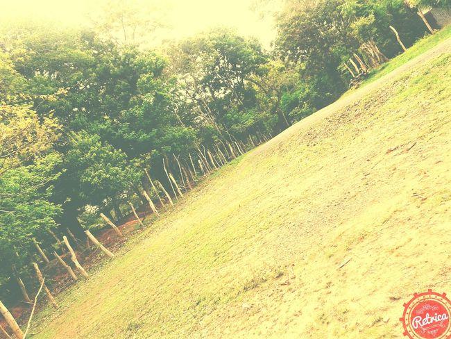 Taking Photos Trees En El Campo Green