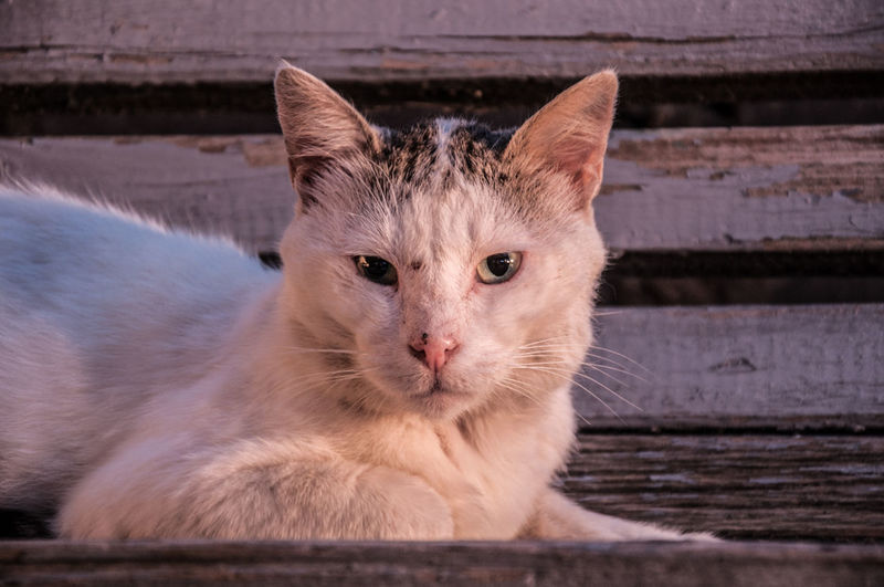 Cat at evening EyeEmNewHere Nikon Animal Themes Close-up D90 Day Domestic Animals Domestic Cat Feline Golden Hour Looking At Camera Mammal Nature No People One Animal Outdoors Pets Portrait Whisker