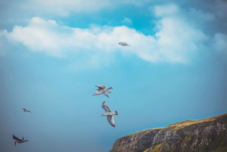 U.K. Scotland Isle Of Skye Uig Nature Landscape Landscapes Flying High