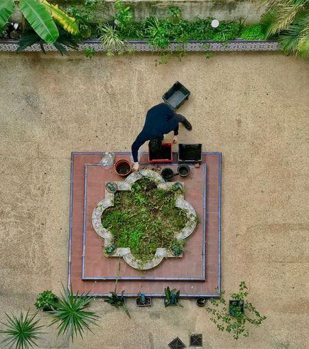 High angle view of potted plant against wall in yard