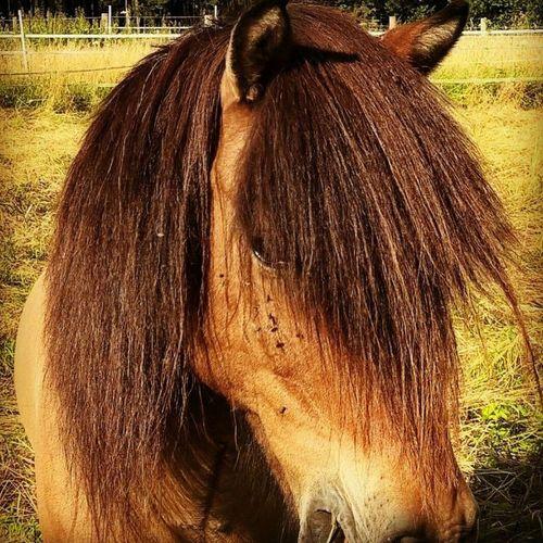 Horse Horse Photography  Horsepower Horse Head Beauty In Nature Awakening Moment Spirituality Nature No People Animal Spirit Shamanism Animal Spirits