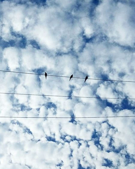 Si subiere a los cielos... Sky Flock Of Birds Bird Cloud - Sky Outdoors Electricity  Cable Cloudy Morning Peace ✌ Blue Skies Fly Flyaway
