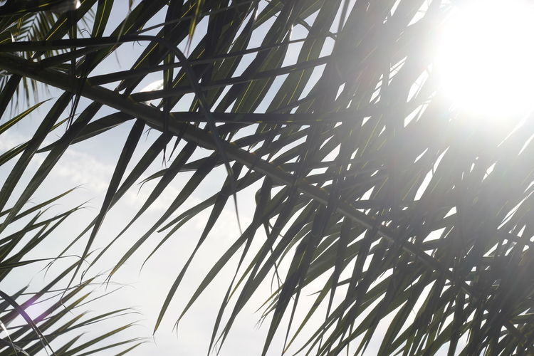 Detail Photography Light Palm Palm Tree Backgrounds Beauty In Nature Close-up Contrast Day Detail Full Frame Growth Hight Contrast Low Angle View Nature No People Outdoors Sky Sun Sundlight Sunlight Tree