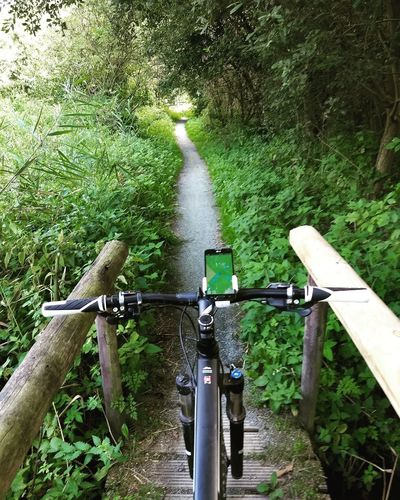 Navigation Bridge Wooden Railing Single Track Path The Way Forward Forest Nature Active Lifestyle  Beauty In Nature Tree Water Bicycle Stationary Grass Green Color Handlebar Mountain Bike Blooming Woods Pathway vanishing point Cycling