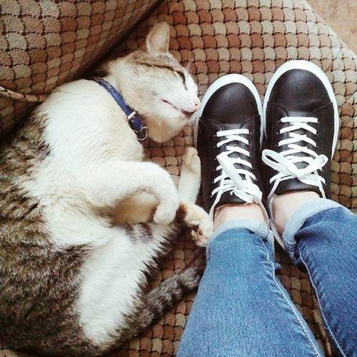 ✳✳✳ If you don't like cats you don't like me ✳✳✳ Goodmorning Bomdia Ohayo Cat Kitten Neko Fluffy Cute Cuteness KAWAII Kawainess Fashion Anime Otakugirl Girly Grunge Indie Boho Catquotes Tumblr Peace Love Music Igrecommend Follow Music PicOfTheDay
