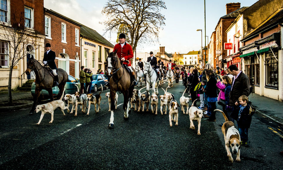 North Herefordshire Hunt rides out of Leominster on the way to Stoke Prior on Boxing Day Boxing Day Boxing Day Hunt Fox Hunting Herefordshire Horse Riding Horses HOUNDS Large Group Of People Leominster Motion Outdoors People Tradition