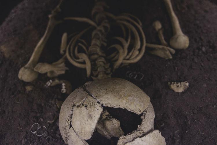 Bones Castle Close-up Culture Dead Dirt Earrings Earth Hunedoara Hunedoara, Museum Skull Solitude Woman