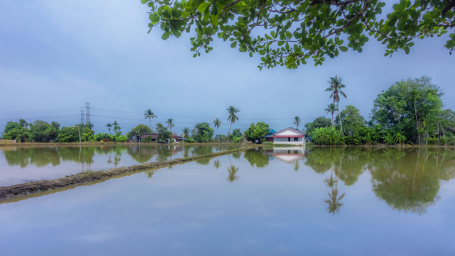 The field is flooded with water before the rice seedings are planted Framing Framing The View Landscape Permatang Manggis Planting Seeds Paddy Field Coconut Trees Boundary Penang Malaysia Kepala Batas Tranquility Village View Tree Water Reflection Rice Paddy Countryside Standing Water
