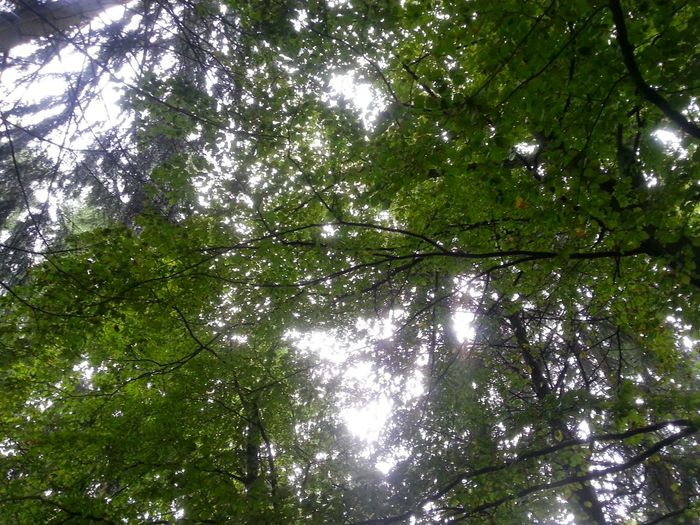 Forest look up