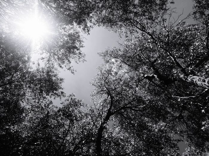 Sometimes beauty is in the little things that life give us Tree Sky Sun Sky Nature  Close-up Outdoors Beauty Natureza Photo Tranquility Eyeemphotography EyeEm Nature Lover Park
