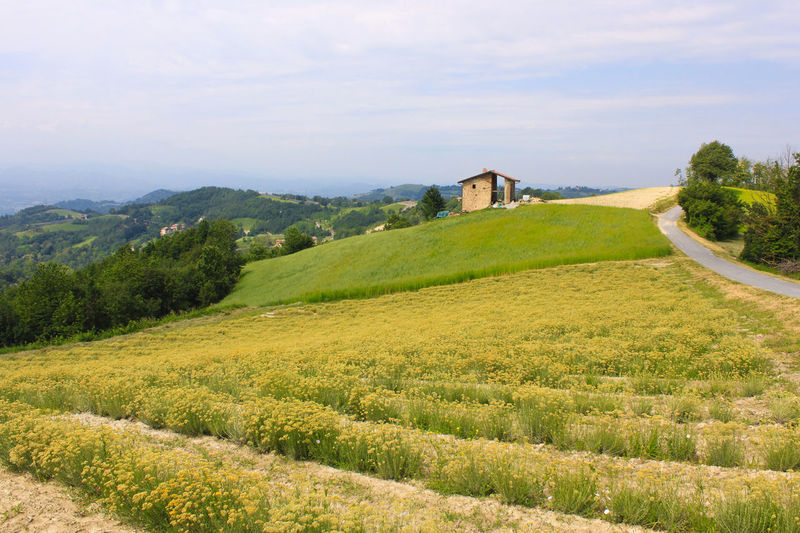 Landscape of fields used for cultivation in the piedmont area in italy