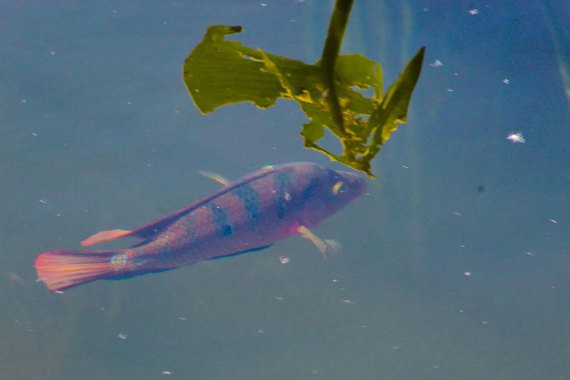 Close-up of fish in lake