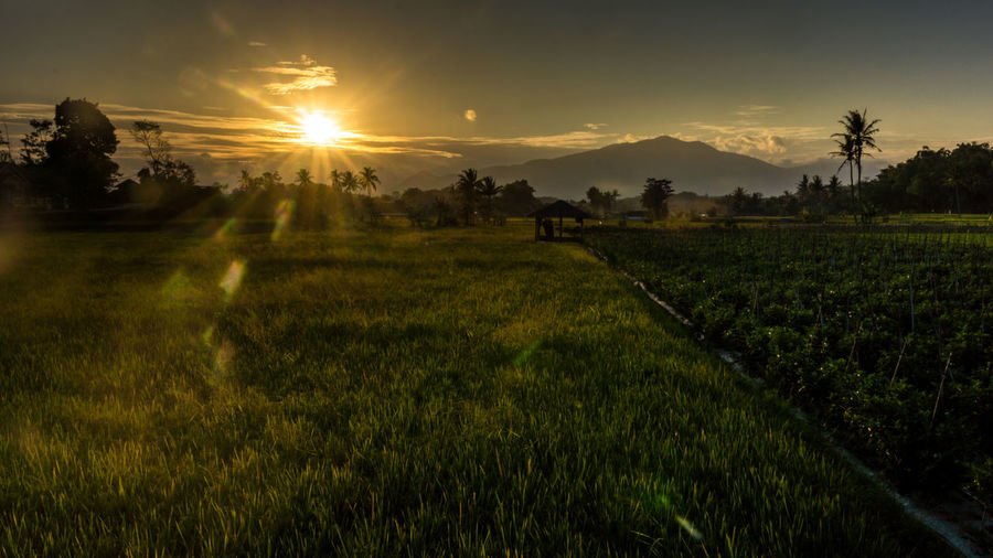 sunrise in green rice field at Garut, West Java, Indonesia with mountain at the back Landscape_photography Landscape_Collection Java West Java  Garut Yellow Sun Horizontal Composition Horizontal Shot Horizontal Images Horizontal Format Tree Water Sunset Rural Scene Beauty Dawn Agriculture Hill Sunlight Social Issues Foggy Rice Paddy Rice - Cereal Plant Cultivated Land Plantation Agricultural Field Crop  Asian Style Conical Hat Growing Plant Life