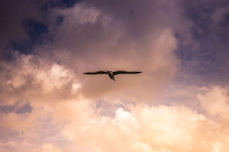 A seagull flying to bright from dark Seagull Bird Cloud Bright Ligh Dark Sky Bird Flying Sunset Spread Wings Silhouette Mid-air Sky Cloud - Sky Animal Themes Fly