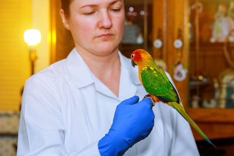 Woman wearing glove while holding parrot on hand