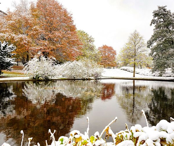 Tree Reflection Water Nature Autumn Growth Day Outdoors Beauty In Nature Travel Destinations Animal Themes Change Lake No People Bird Architecture Building Exterior Scenics Sky Snow Covered First Snow From Autumn To Winter Tree Water Reflections Calm